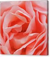 Centre - Rose Canvas Print