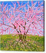 Cercis Tree, Oil Painting Canvas Print