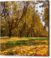 Ceres Orchard - Fall Canvas Print