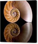Chambered Nautilus Canvas Print