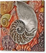 Chambered Nautilus Shell Abstract Canvas Print