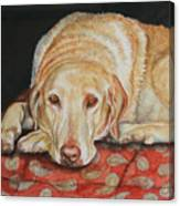 Chamois Canvas Print