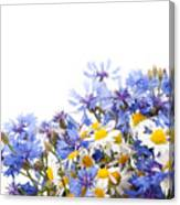 Chamomile And Cornflower Mix Canvas Print