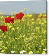 Chamomile And Poppy Flowers Meadow Canvas Print