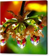 Chandelier From The Rain Drops Canvas Print