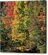 Changing Colours Of The Fall Canvas Print