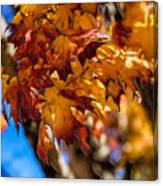Changing Maples Canvas Print