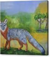 Channel Islands' Island Fox Canvas Print