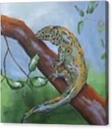 Channel Islands Night Lizard Canvas Print