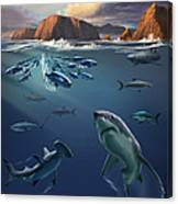 Channel Islands Sharks Canvas Print