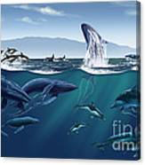 Channel Islands Whales Canvas Print