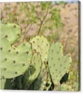 Character Cacti Canvas Print