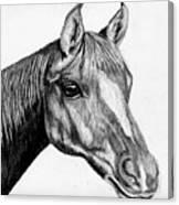 Charcoal Horse Canvas Print