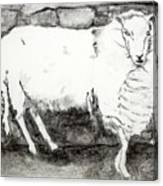 Charcoal Sheep Canvas Print