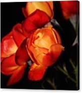 Charisma Roses 4 Canvas Print