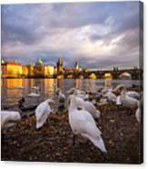Charles Bridge, Prague With Swans Canvas Print