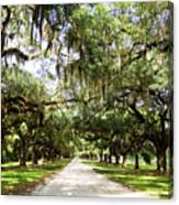 Charleston Oaks 1 Canvas Print