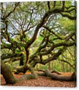 Charleston Sc Angel Oak Tree South Carolina Landscape Canvas Print