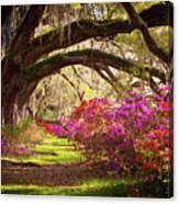 Charleston Sc Magnolia Plantation Gardens - Memory Lane Canvas Print