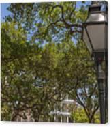 Charleston Through The Tree's Canvas Print