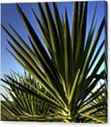 Charleston Yucca Canvas Print