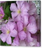 Charming Clematis Canvas Print