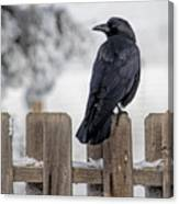 Charming Corvid Canvas Print