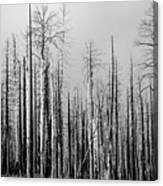 Charred Trees Canvas Print