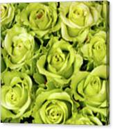 Chartreuse Colored Roses Canvas Print