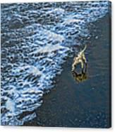 Chasing Waves Canvas Print