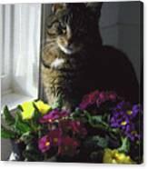 Chat Et Fleurs Canvas Print