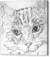 Chat Somnolant Resting Cat Canvas Print