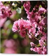 Chateau Rose Pink Flowering Crepe Myrtle  Canvas Print