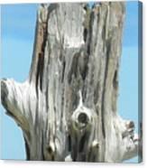 Chatham Driftwood Canvas Print