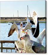 Chatty Seagull Birds Canvas Print