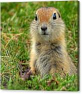 Check Out My Good Side Canvas Print