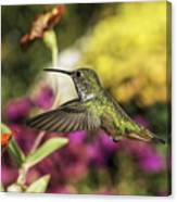 Check Out That Zinnia Canvas Print