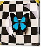 Checker Plate And Blue Butterfly Canvas Print
