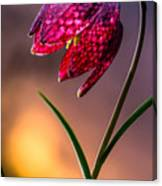 Checkered Lily Canvas Print