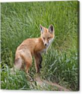 Checking The Perimeter Canvas Print