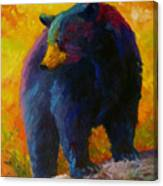 Checking The Smorg - Black Bear Canvas Print