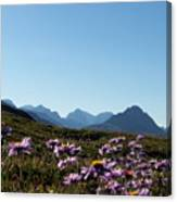 Cheerful Alpine Daisy Meadows Canvas Print