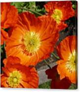 Cheerful Orange Flowers  Canvas Print