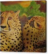 Cheetah 2 Canvas Print