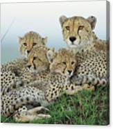 Cheetah And Her Cubs Canvas Print