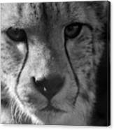 Cheetah Black And White Canvas Print