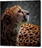 Cheetah Closeup Portrait Canvas Print