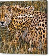 Cheetah In The Grass Canvas Print