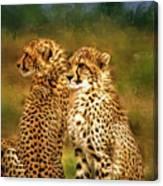 Cheetah Siblings Canvas Print