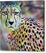Cheetah Viii Canvas Print